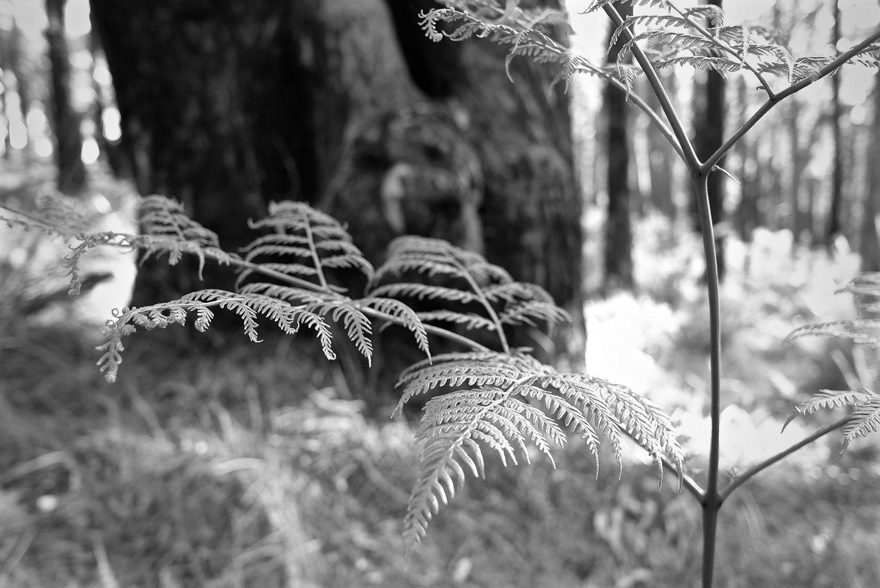 1000 Steps Australia Australia & Travel Australia Foilage Australian Landscape Dandenong Ranges Ferns Forest Leicacamera Nature Photography