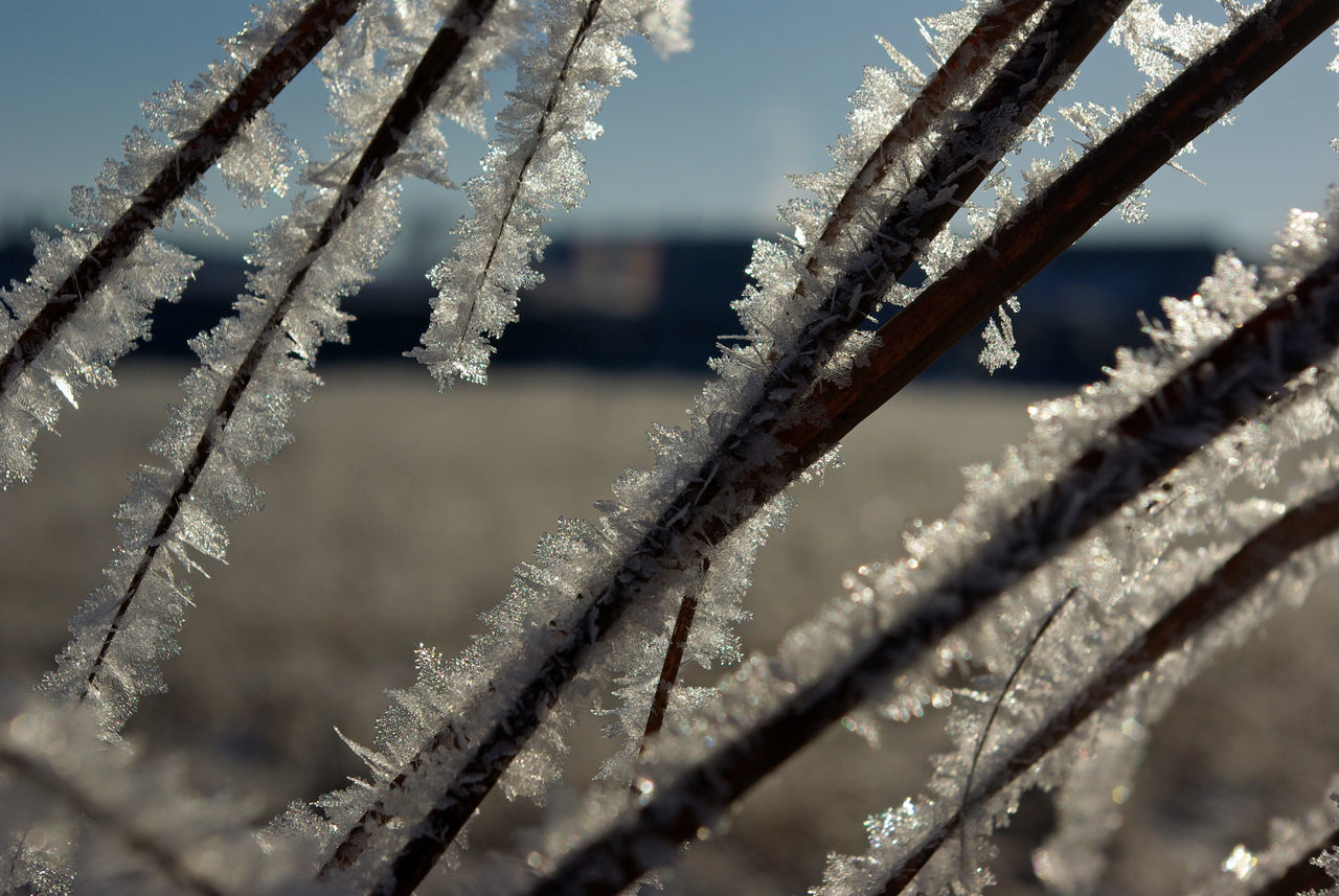 Beauty In Nature Beauty In Nature Close-up Cold Temperature Day Focus On Foreground Frost Frozen Frozen Frozen Nature Ice Ice Ice Cristal Nature Nature Nature On Your Doorstep No People Outdoors Sky Snow Water Winter Winter Winter Wonderland Wintertime