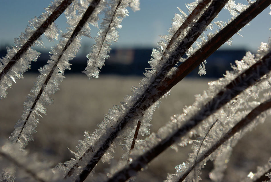 Beauty In Nature Beauty In Nature Close-up Cold Temperature Day Focus On Foreground Frost Frozen Frozen Frozen Nature Ice Ice Ice Cristal Nature Nature Nature On Your Doorstep No People Outdoors Sky Snow Art Is Everywhere Winter Winter Winter Wonderland Wintertime