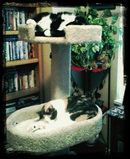 cat condo suviving the heatr Taking Photos Enjoying Life