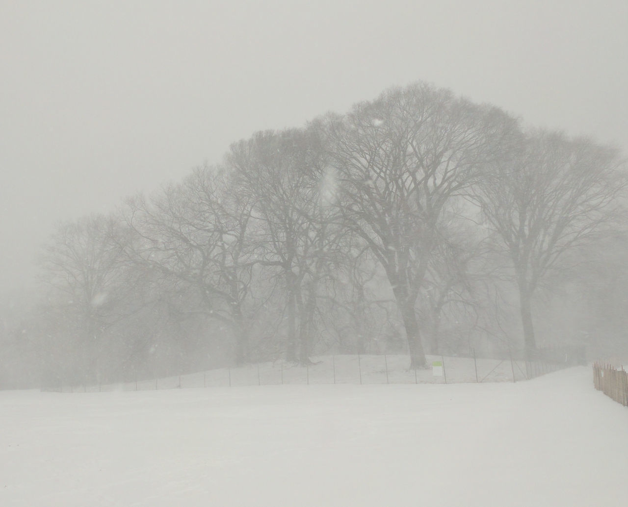 Almost Black&white Brooklyn City Park Nature Park Prospect Park Snow Snowscape Snowstorm2016 Trees Urban Nature White Whiteout Winter