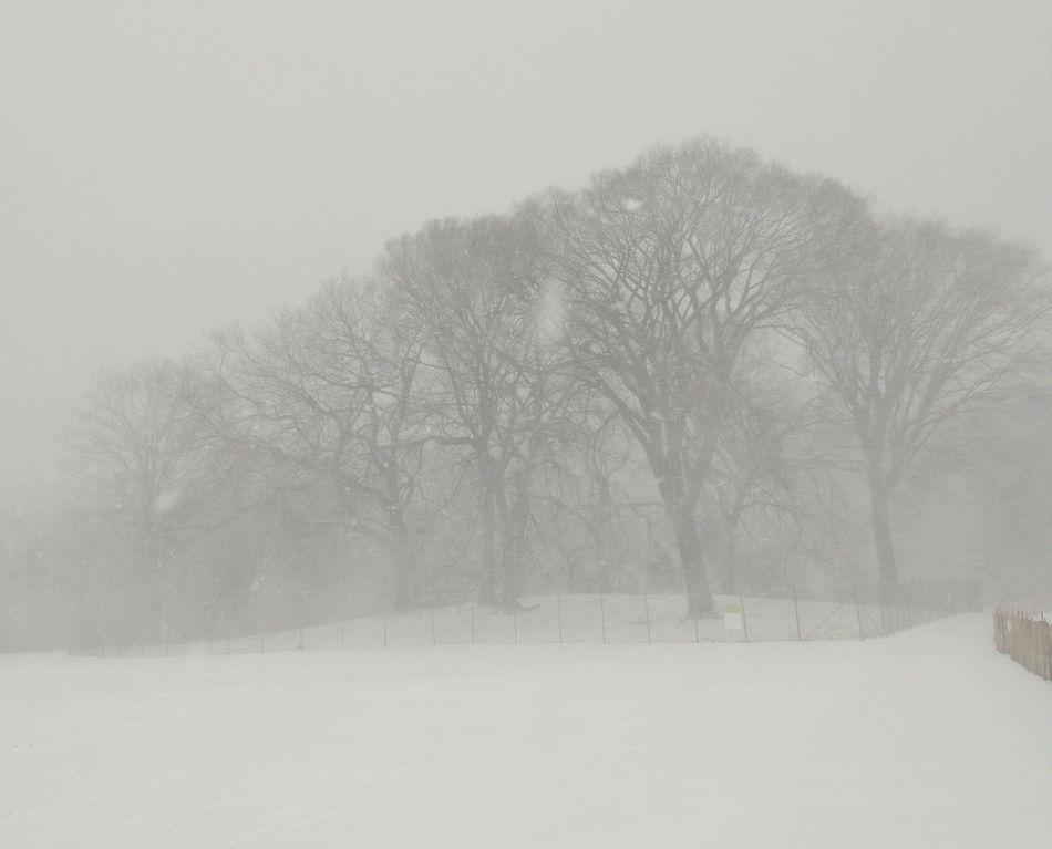 Almost Black&white Brooklyn City Park Nature Park Prospect Park Snow Snowscape Snowstorm2016 Trees Urban Nature White Whiteout Winter