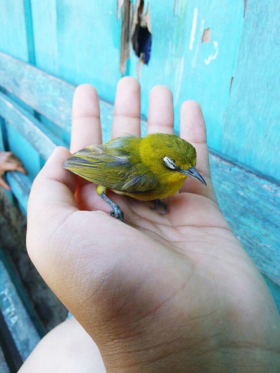 Beautiful stock photos of cute, Animal Themes, Animals In The Wild, Bird, Care