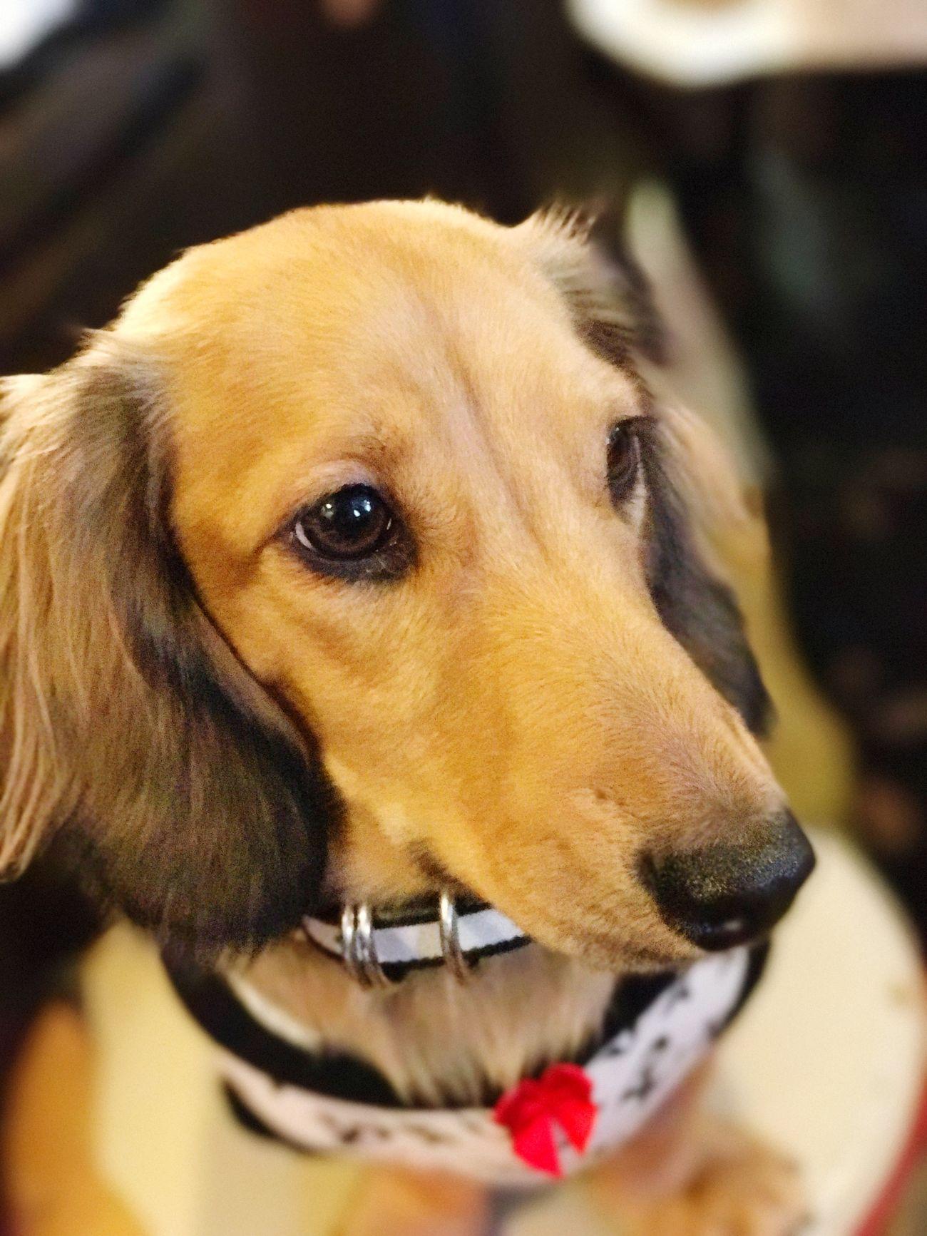 IPhone7Plus Dog Pets Close-up