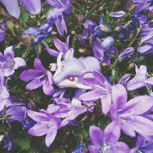 He seems to like the flowers! Rattata Pokémon