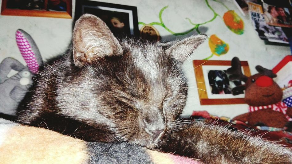 Animal Themes Indoors  Domestic Animals Black Cat Catslife Yennefer Cat♡ Cats Of EyeEm Cat Lovers Cats 🐱 Cats Of The Day Cats Of The World Love My Cat❤❤❤🐱🐱🐱 Petscorner Relaxing Sleeping
