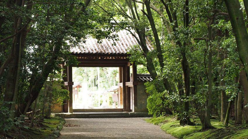 秋篠寺… Green Nature Beautiful ♥ Beautiful Nature EyeEm Nature Lover EyeEm Best Shots Nara,Japan Light And Shadow Japanese Temple