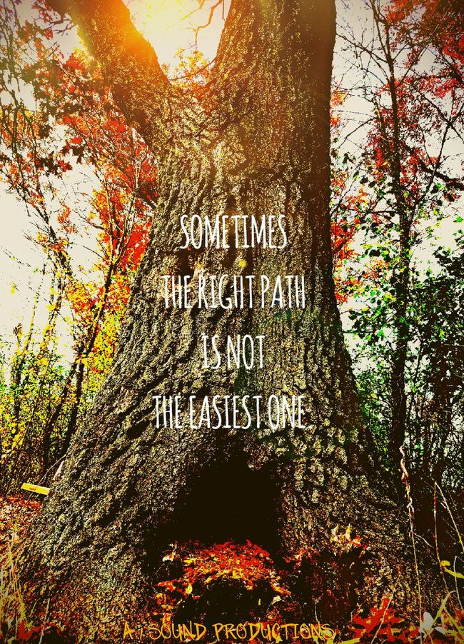 Beauty In Nature Tree Outdoors Tranquility Inspirations A 1 SOUND PRODUCTIONS