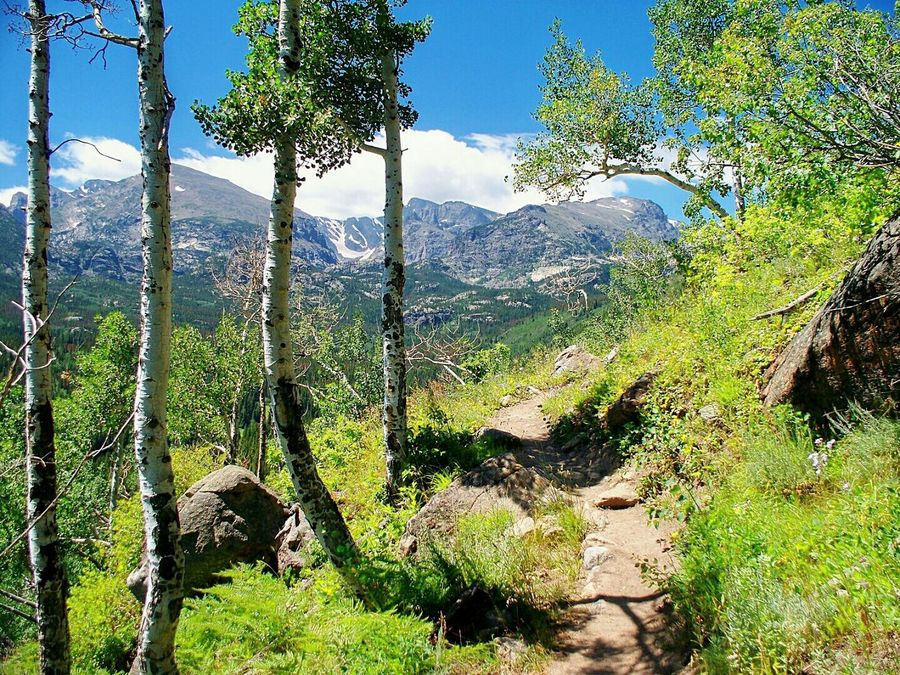 Mountain Path Mountains Sunny Day 🌞 Mountain_collection Mountains And Sky Forest Mountains And Valleys Mountains Landscape Sunny Summer Days Mountain Trail Mountain Path Mountain Hiking Hiking Rocky Mountains Rocky Mountain National Park