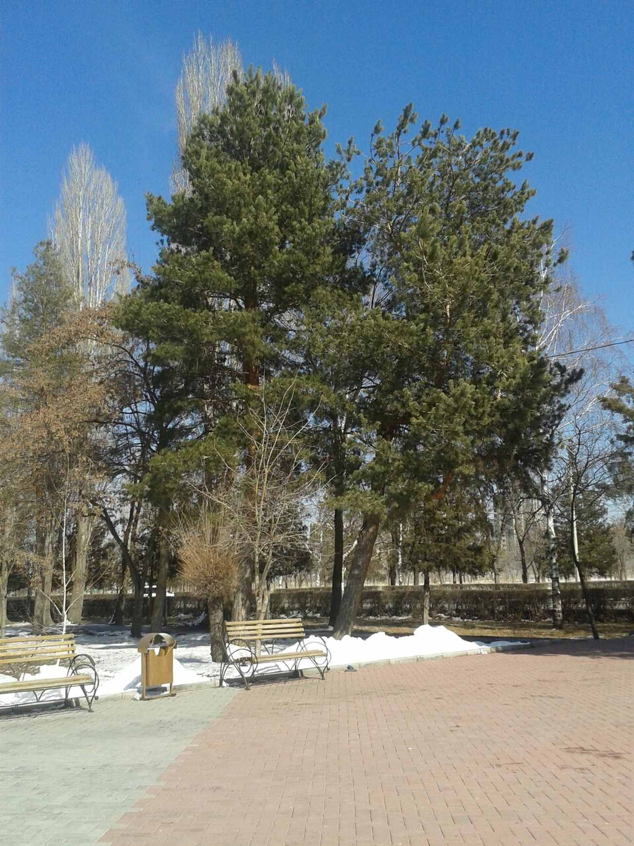 Still snowy but warm enough... Feel the breath of Spring! Bishkek Kyrgyzstan Hugging A Tree