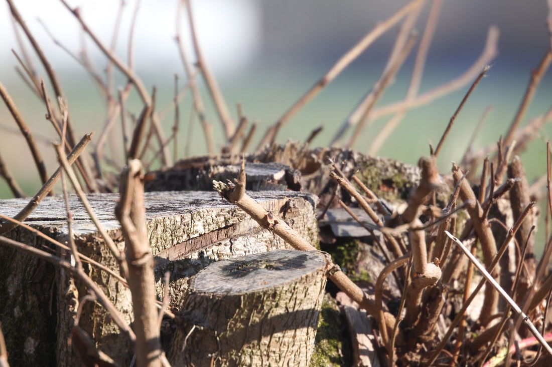 Wood Branch Close-up Nature Outdoors Springtime Still Life Stump