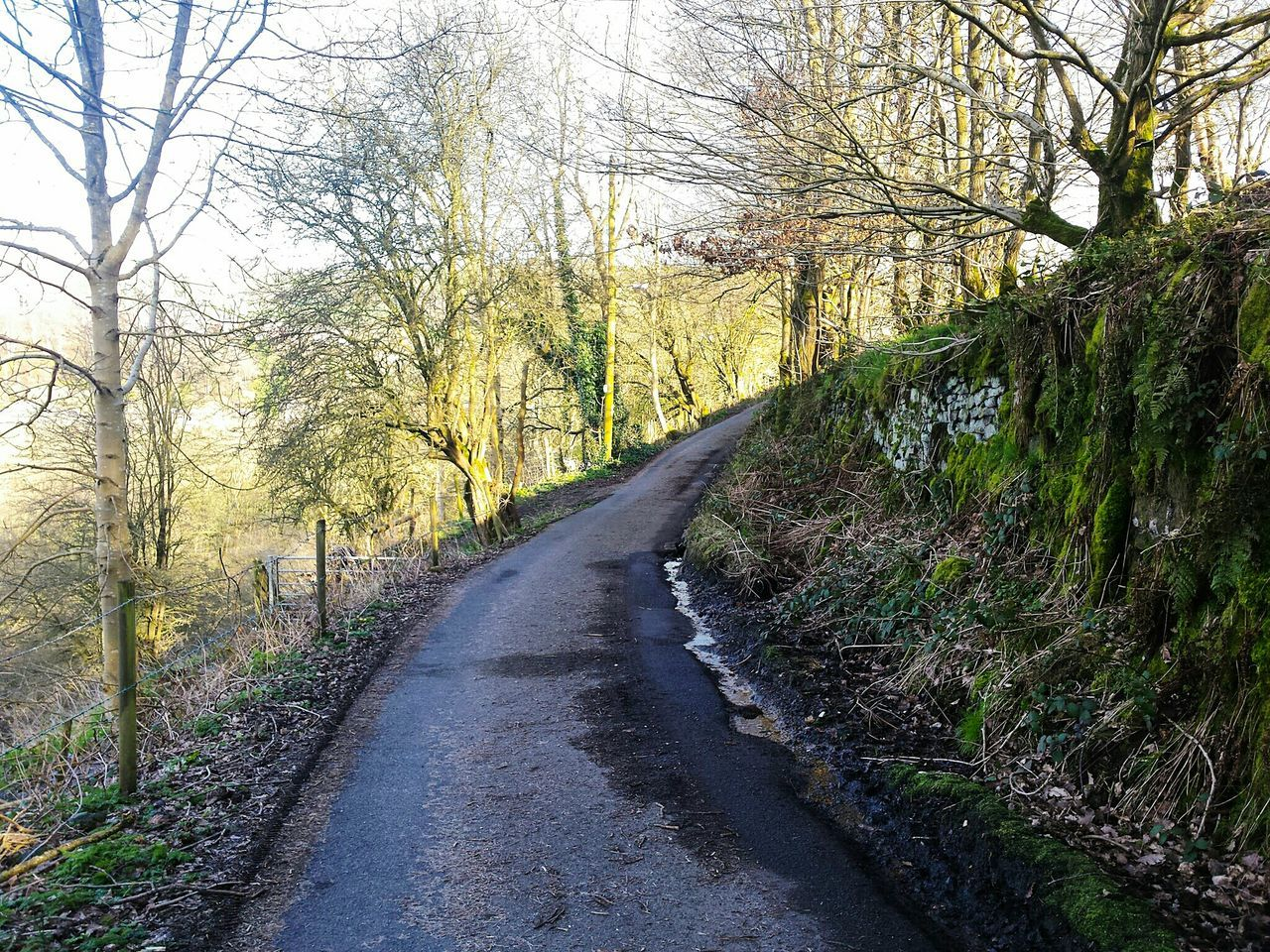 Tree Nature Growth The Way Forward Beauty In Nature Road No People Sunlight Day Transportation Outdoors Tranquility Scenics Green Color Sky Leading Lines Wall Trees Landscapes Calderdale Landscape Yorkshire Countryside Path Road