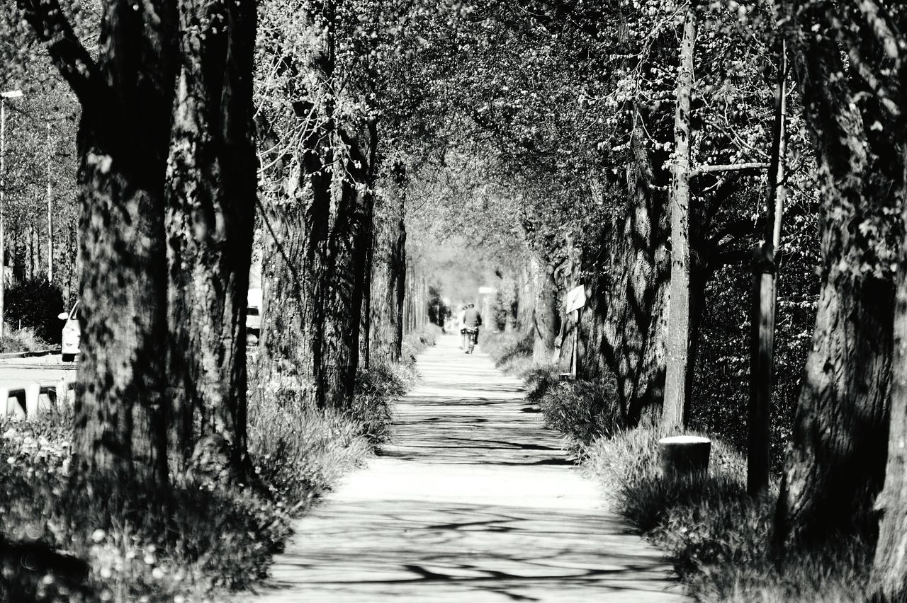 Rear View Of Man Riding Bicycle Amidst Trees On Footpath