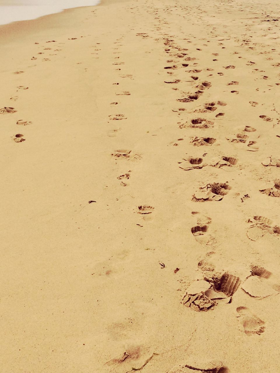 sand, beach, footprint, paw print, animal track, nature, high angle view, day, no people, outdoors, track - imprint, animal themes, close-up, sand dune