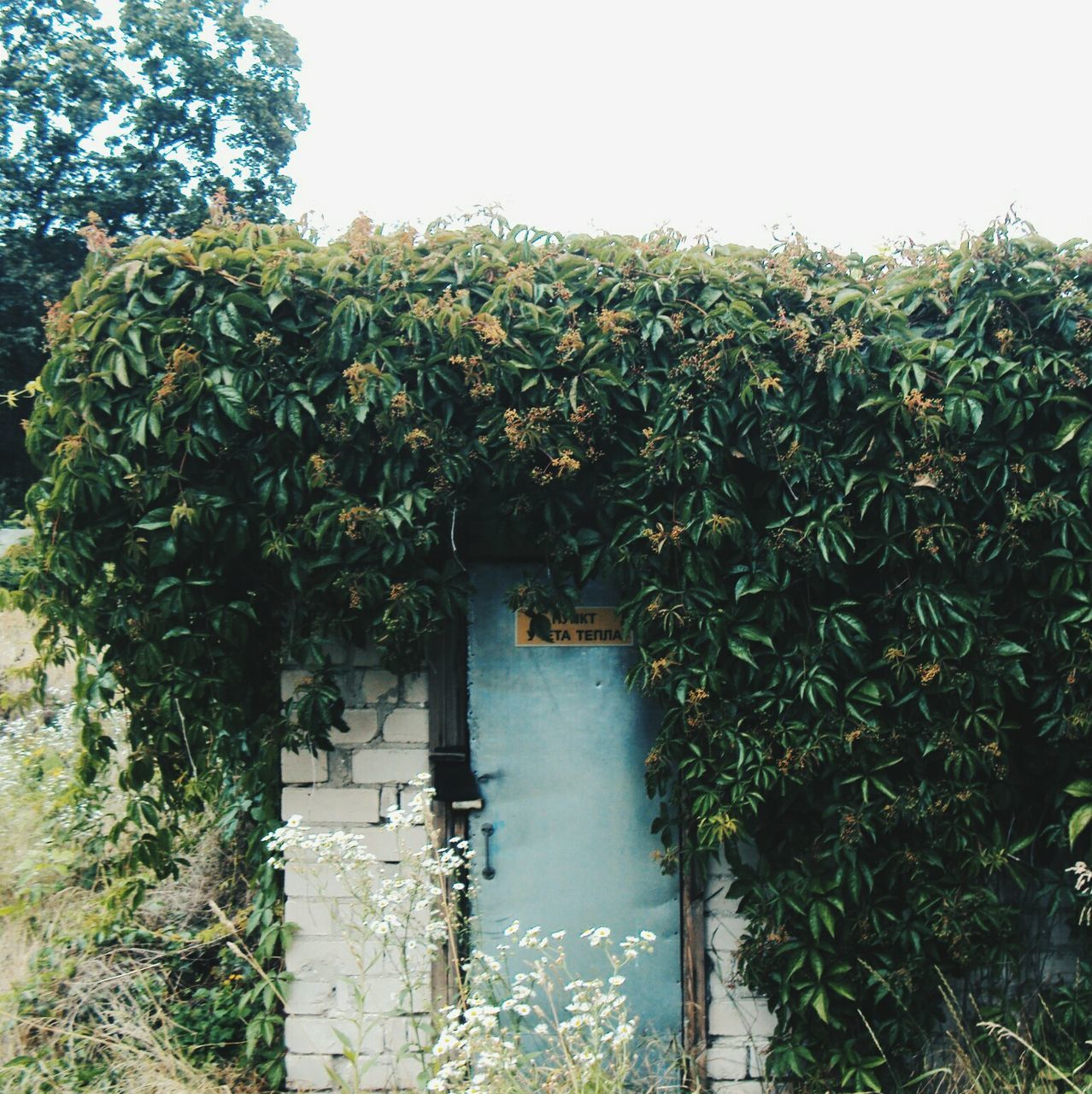 growth, plant, nature, leaf, tree, green color, day, outdoors, growing, ivy, no people, green, built structure, architecture, clear sky, creeper plant, beauty in nature, scenics, sky, building exterior, freshness