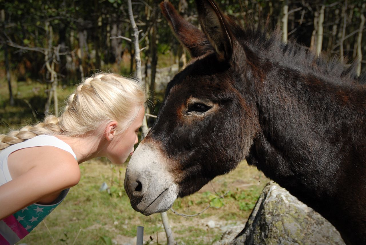 Side View Of Young Woman Kissing Donkey On Field
