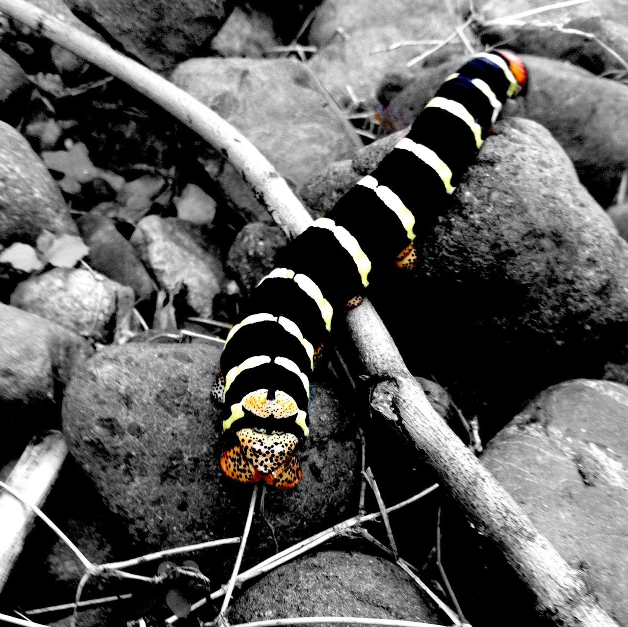 animal themes, one animal, animals in the wild, insect, animal wildlife, close-up, outdoors, no people, day, nature