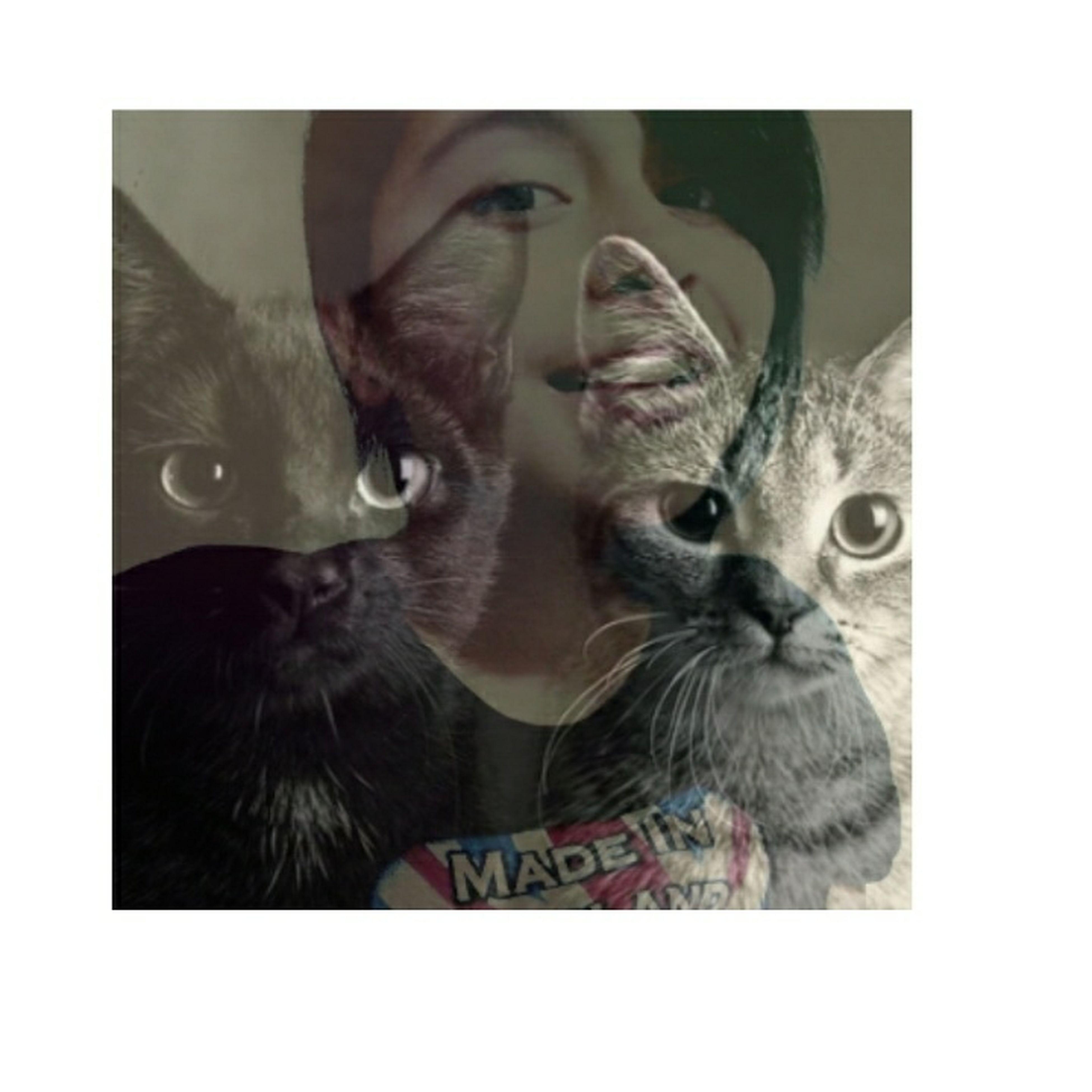 Los gatos son mi vida Cats Me Inlove ♡ Happy Colombia ♥  Fotos De Gatos