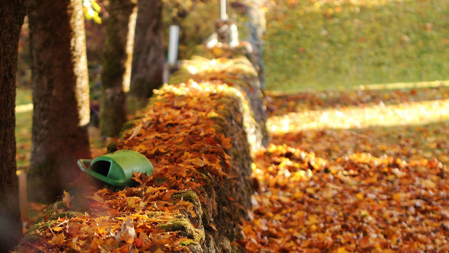 A stone wall with autumn leaves - Autumn Autumn Colors Autumn Leaves Calmness TakeoverContrast Natural Condition Colors Day First Eyeem Photo Focus On Foreground Hello World Idyllic Scenery Leaves No People Non-urban Scene Outdoors Stone Wall Taking Photos Tranquil Scene Tranquility Tree Trunk Vibrant Color Walking Around Wall Watering Can