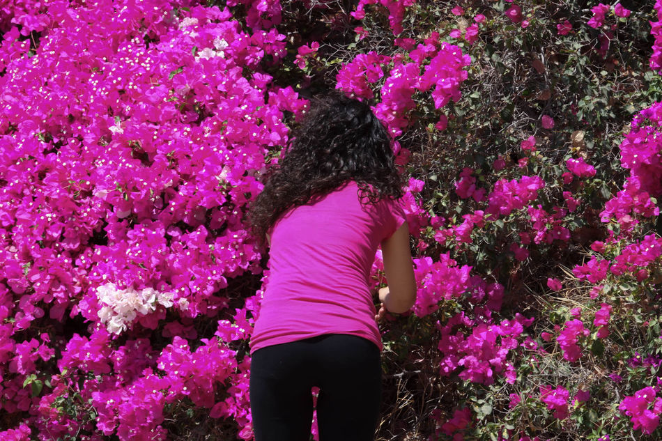 Bougainvillea Beautiful Beauty In Nature Bougainvillea Bougainvillea Flower Casual Clothing Colorful, Color, Design, Flower Green Growth In Bloom Leisure Activity Lifestyles Magenta Nature Orange Color Outdoors Pink Color Plant Plant Plants And Flowers Relaxing Wall Climbing Wall Climbing Bougainvillea Wall Climbing Plant Water