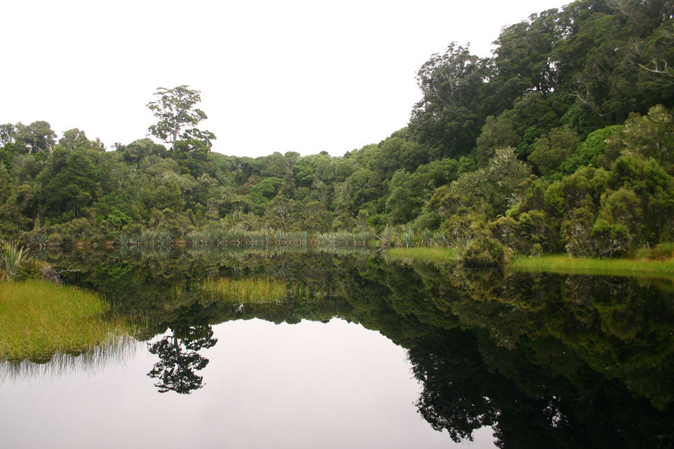 100 % Natural ♥ Beauty In Nature Green Color Lake Mirror Lake New Zealand Reflection Standing Water Water