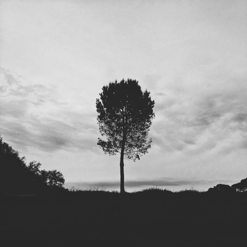 Tree Tranquil Scene Relaxing Tranquility Cloud No People Calm Dramatic Sky Solitary Nature Silhouette silence Blackandwhite Meditation park Villa Pamphili