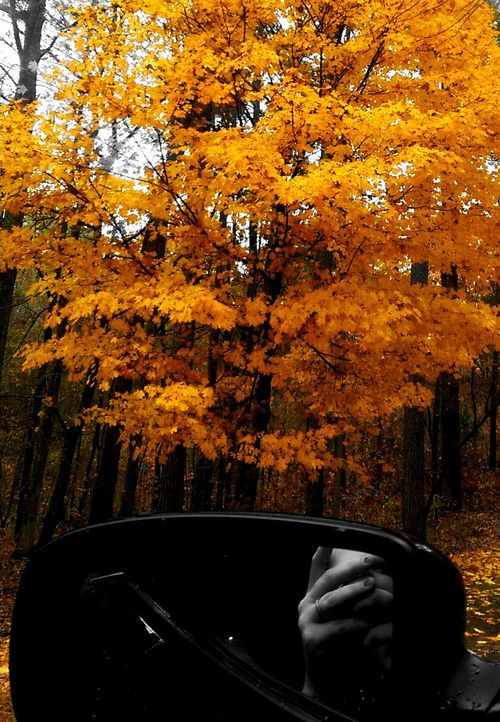 That's Me Taking Photos Mississippi Fall