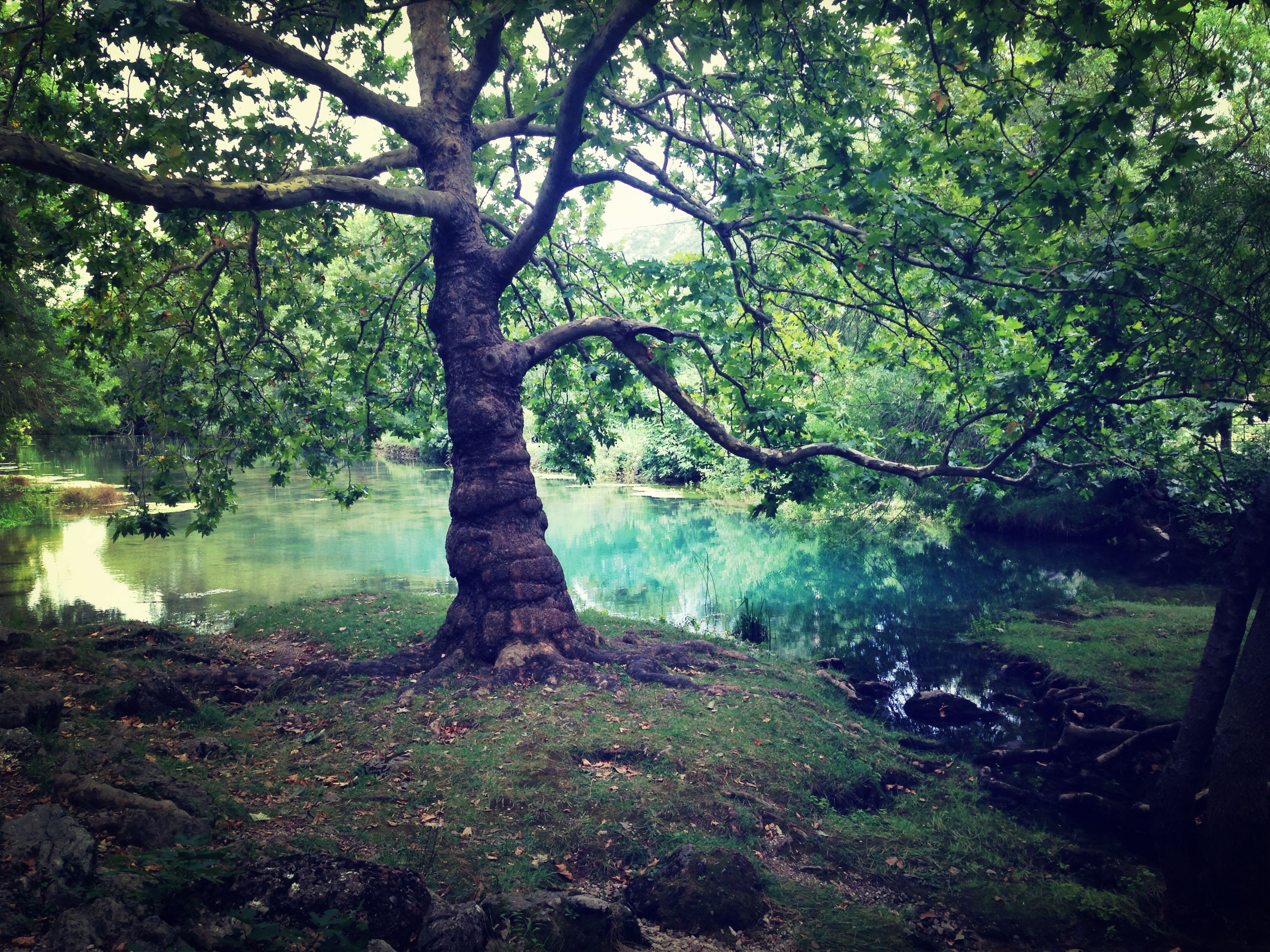 tree, water, reflection, growth, tranquility, branch, nature, river, green color, lake, bridge - man made structure, tranquil scene, beauty in nature, pond, plant, connection, scenics, park - man made space, day, tree trunk