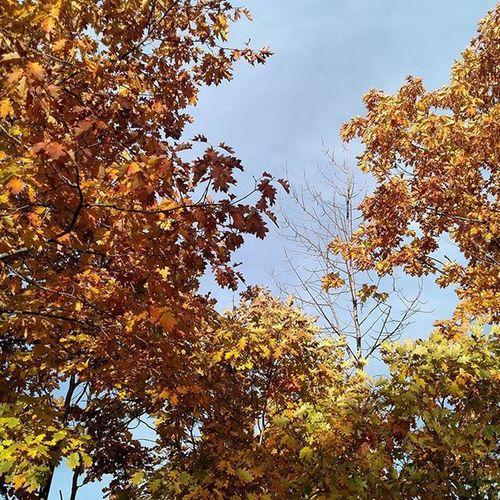Amazingpics Fall Trees Niceview Peaceful Relax Nature Fallcolors