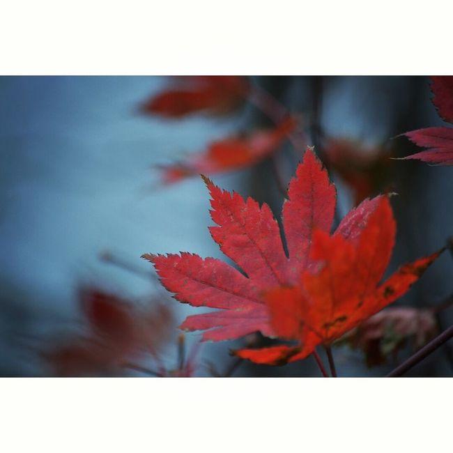 Nature Autumn Leaves Autumn🍁🍁🍁 Autumn Colors First Eyeem Photo