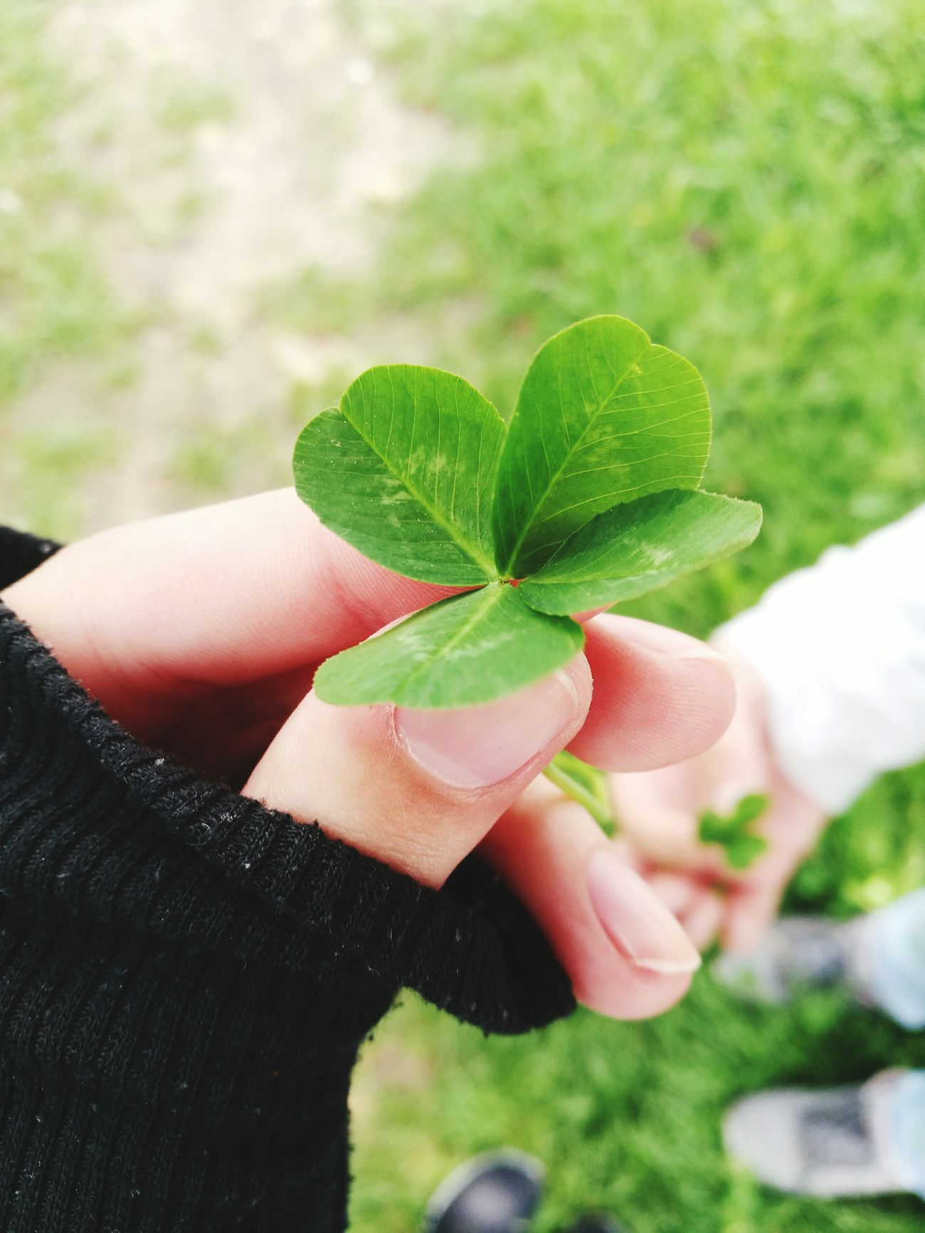 Human Body Part Human Hand Holding Human Finger One Person Hand Leaf Close-up People Personal Perspective Adult Focus On Foreground Nature Outdoors Green Color Lifestyles Body Part Plant One Woman Only Women 4 4leaf 4leafclover