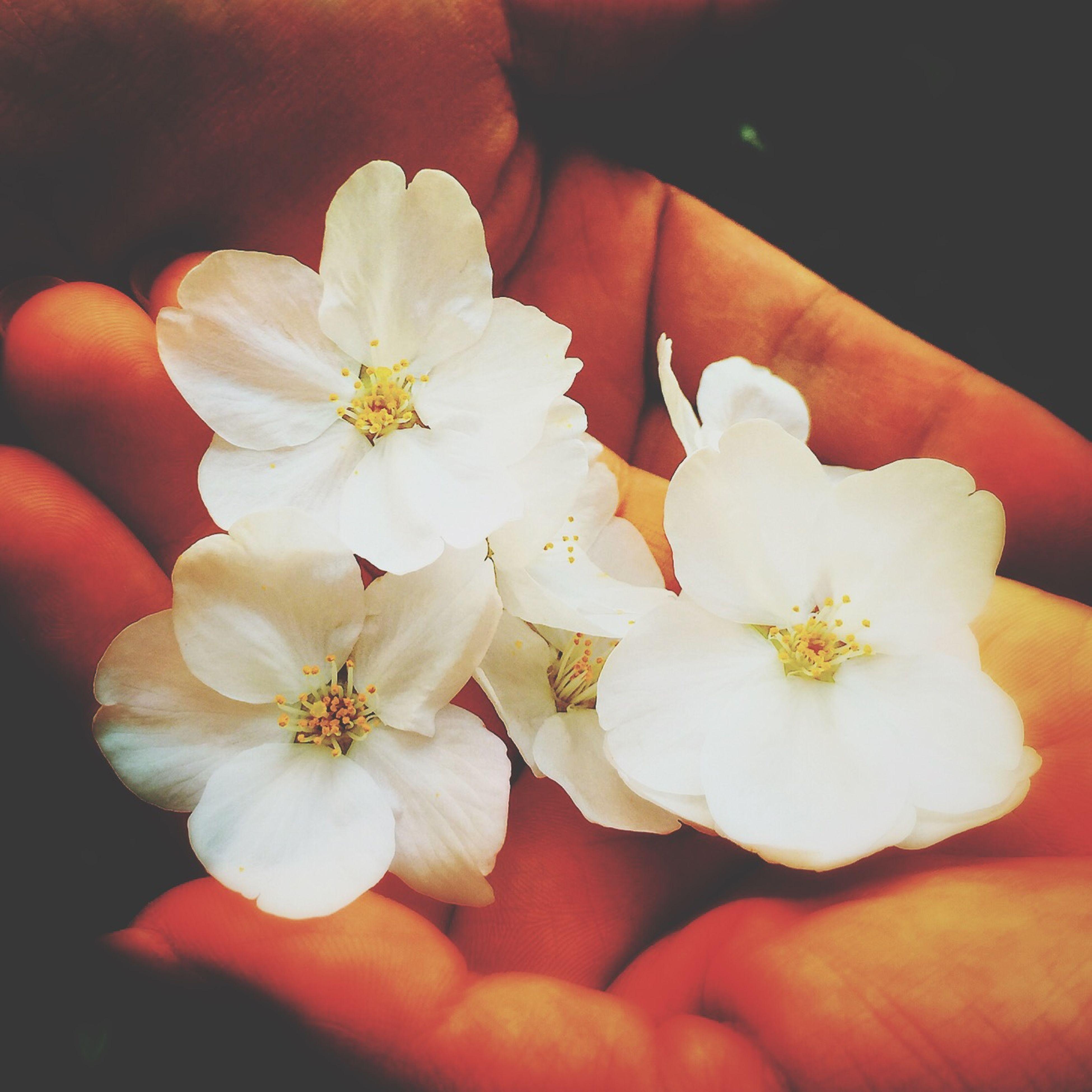 降誕会 釈尊生誕の日 降誕会 花祭り Sakura2015 Sakura Cherry Blossoms Hand EyeEm Nature Lover Beautiful Day Spring Flowers 桜