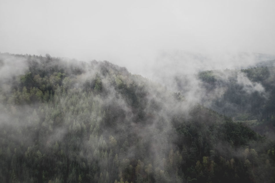 After Rain Beauty In Nature Fog Forest Grey Landscape Mist Mountain National Park Nature Nature Photography No People Outdoors Power In Nature Saxony Scenics Tranquil Scene Tranquility Tree Wild Forest