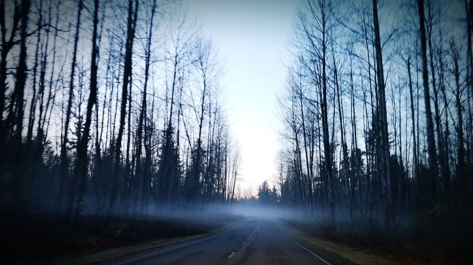 Fog in the wood The Way Forward Forest Outdoors Erie Fog And Trees Foggy Evening Road To Nowhere