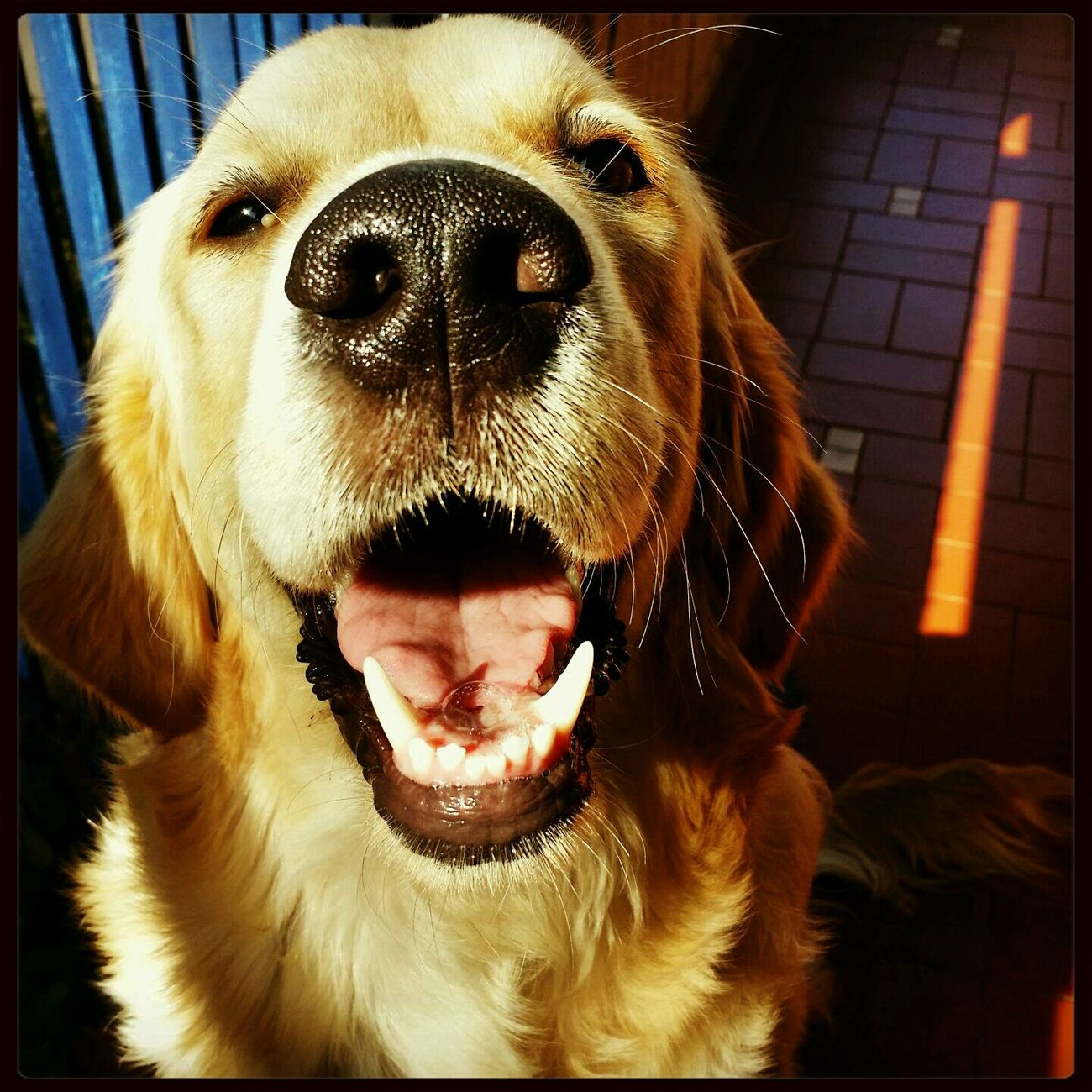 Argo Dog Goldenretriever Ilovegoldenretrievers Mydog First Eyeem Photo