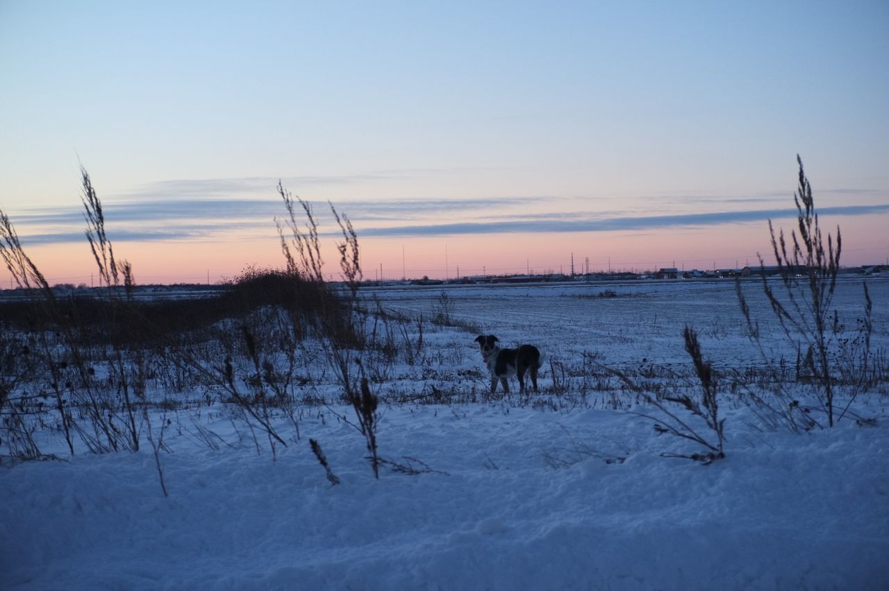 Animal Themes Beauty In Nature Cold Temperature Day Domestic Animals Field Landscape Mammal Nature No People Outdoors Scenics Sky Snow South Fargo Tree Winter Winter