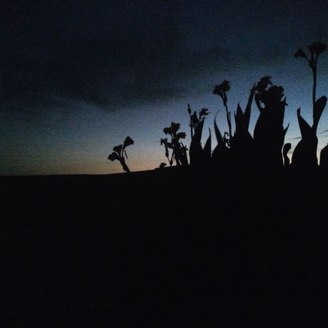 Flowers Nightphotography Tenerife