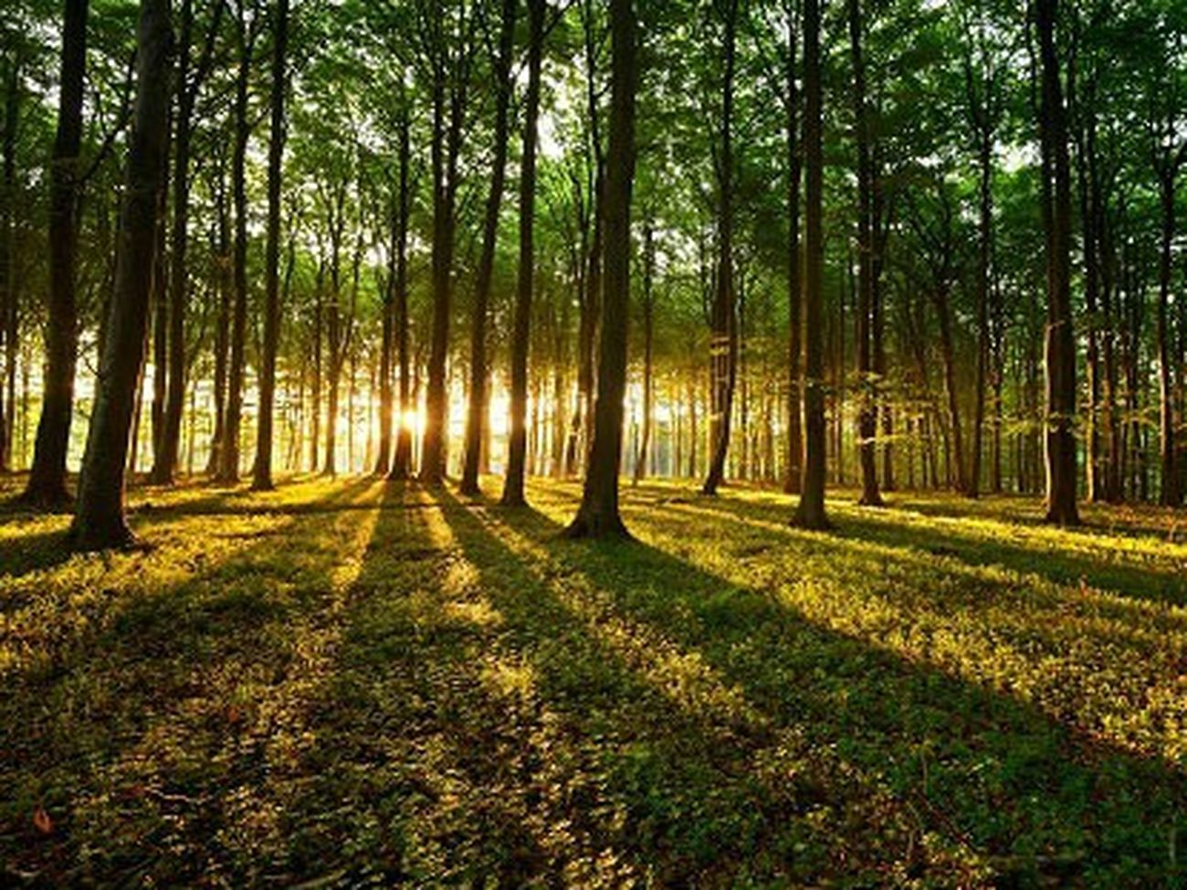 Hello World Taking Photos Hanging Out EyeEm Gallery Check This Out Huggingatree  Nature Swimming Landscape