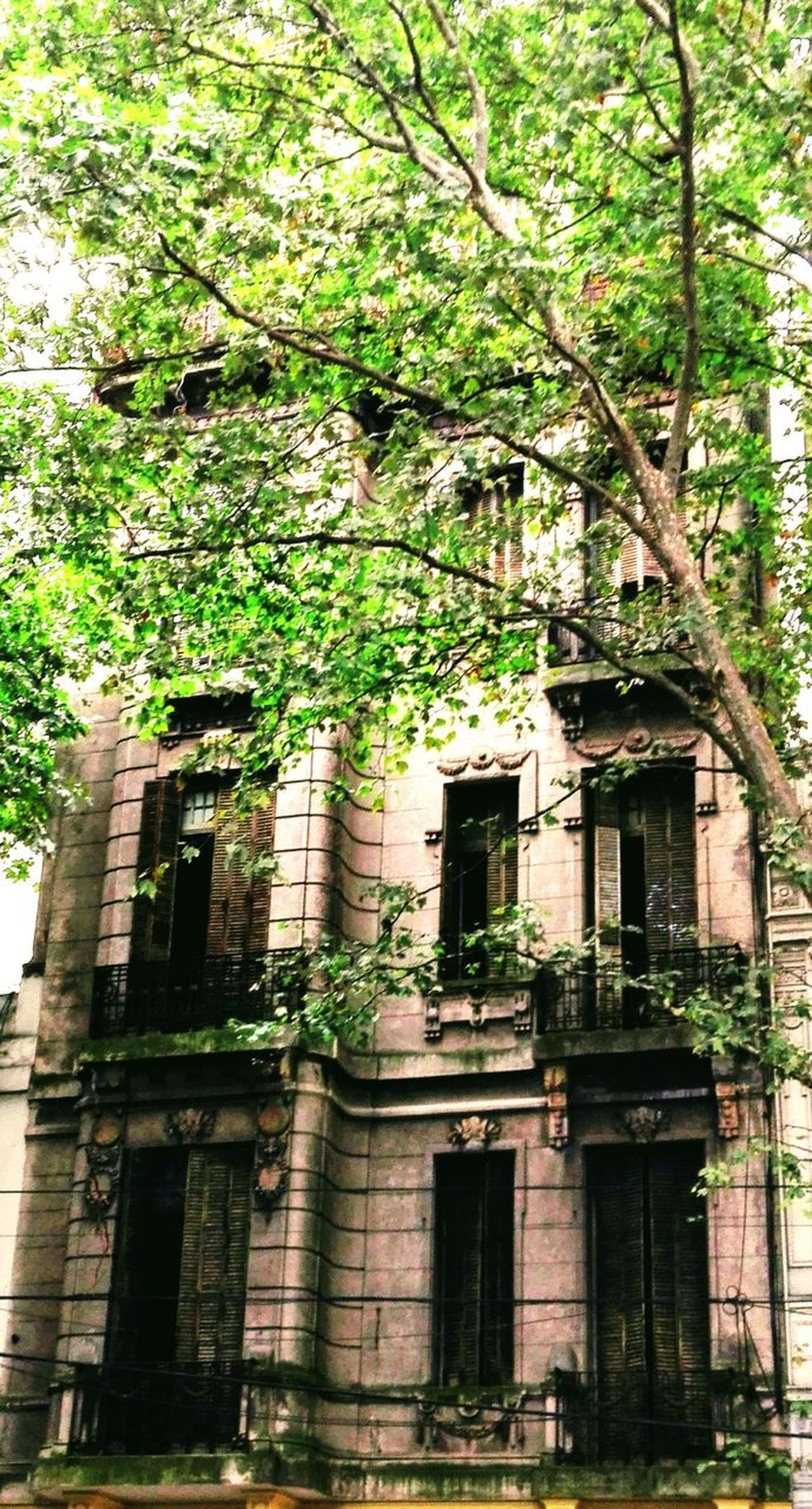Urban Exploration Cityexplorer City Building Exterior Architecture Built Structure Low Angle View Outdoors Tree No People Growth City Day Nature