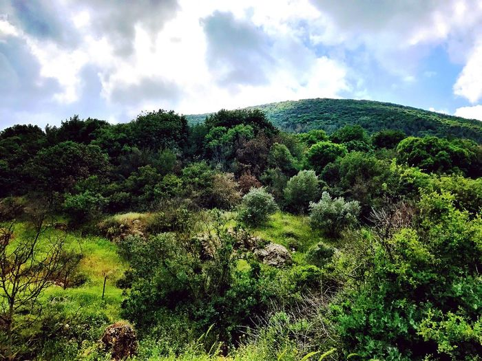 Forest. Nature Tranquility Sky Beauty In Nature Day Cloud - Sky Landscape Scenics Tranquil Scene Growth Outdoors No People Plant Mountain Tree EyeEm Best Shots EyeEm Nature Lover
