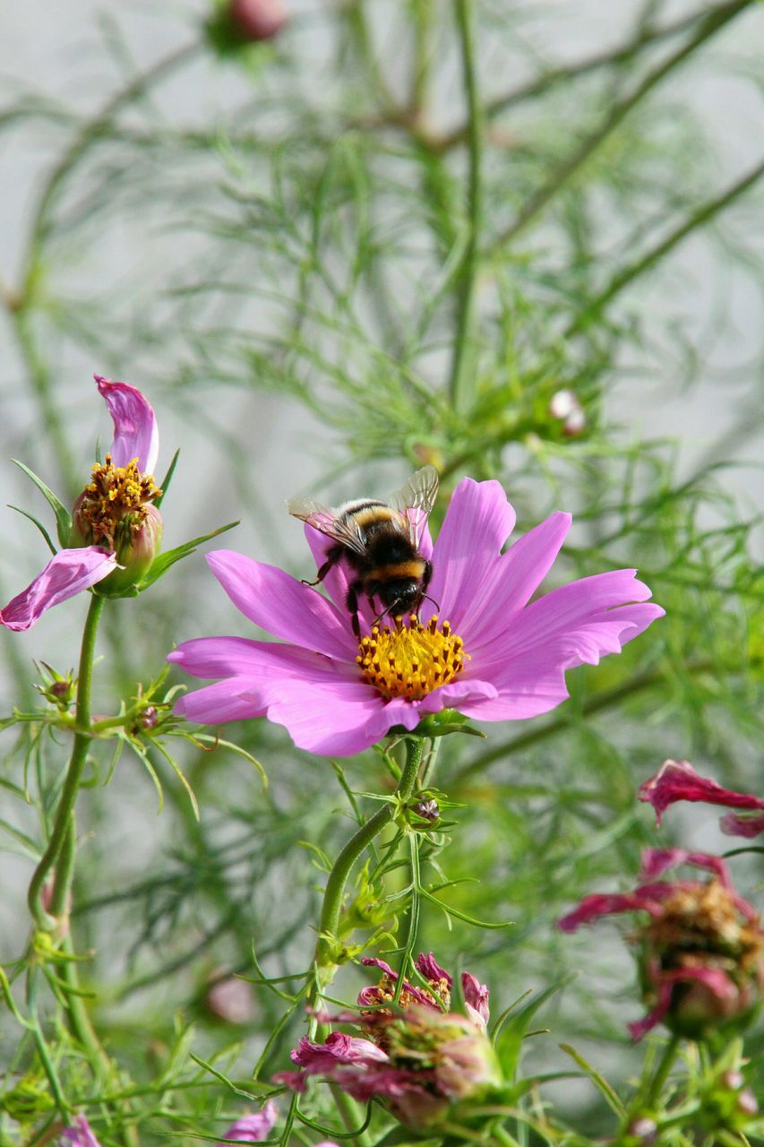 Insect Pollinating Pink Flower