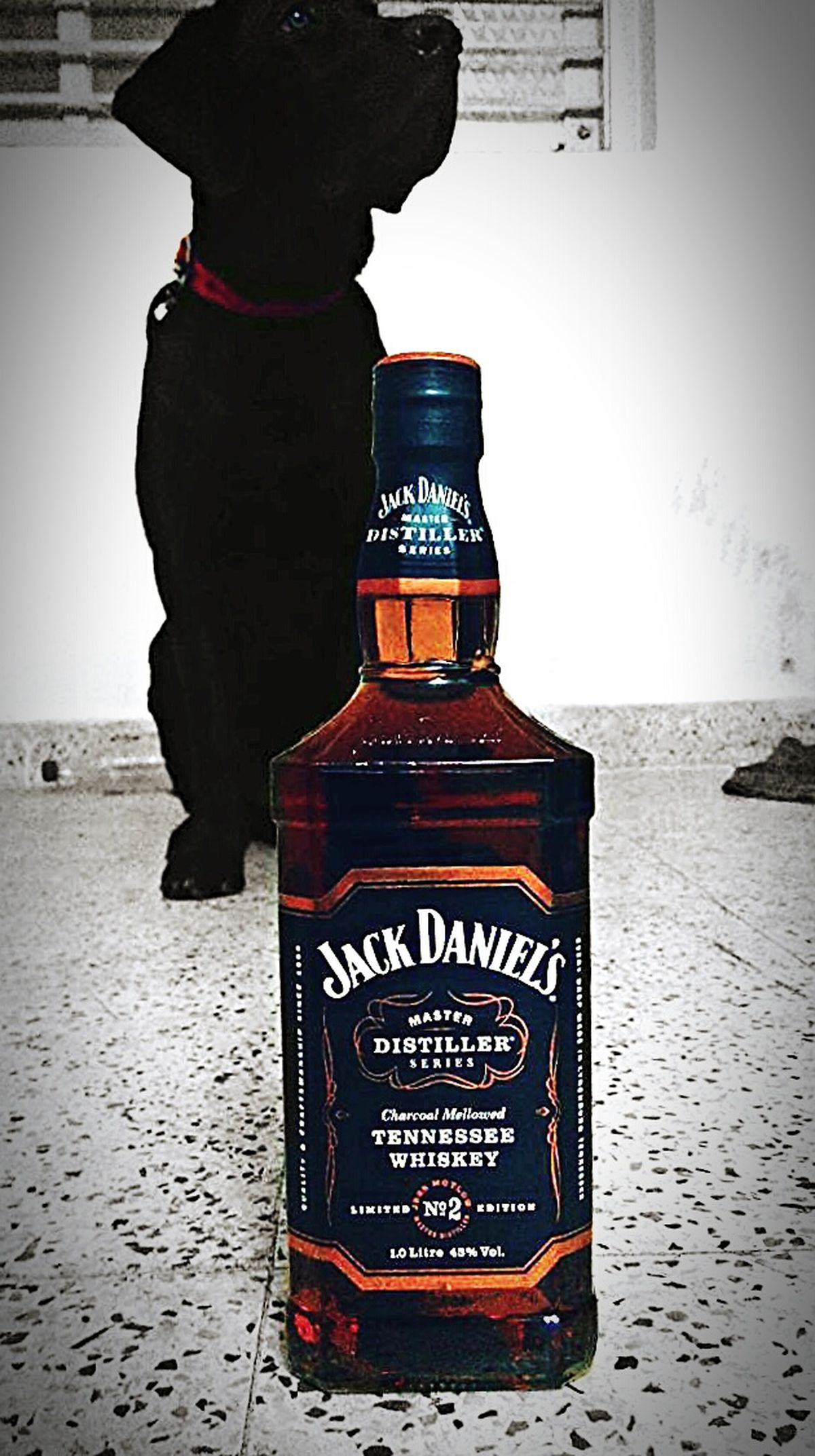 Black Dog on Weekend ♥week with Awesome Music Barbecue and Jackdaniels .