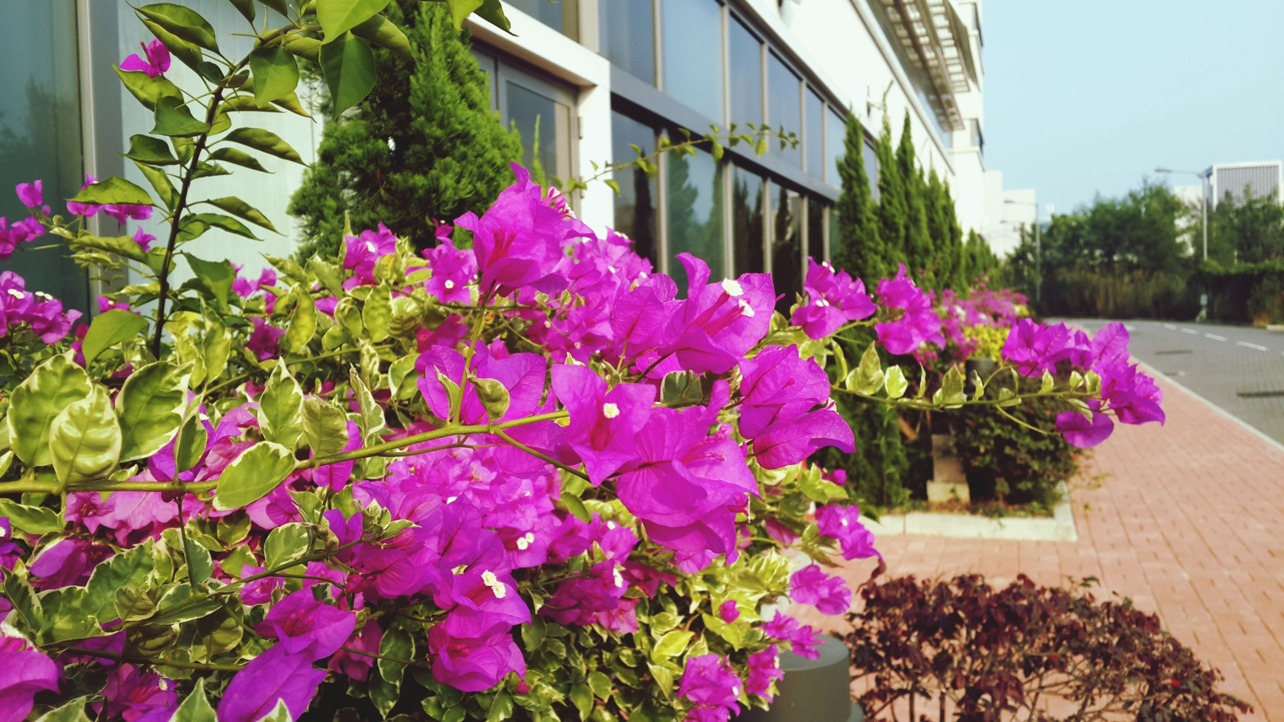 flower, freshness, growth, fragility, plant, building exterior, built structure, purple, architecture, blooming, beauty in nature, petal, nature, in bloom, pink color, leaf, flower head, potted plant, blossom, day
