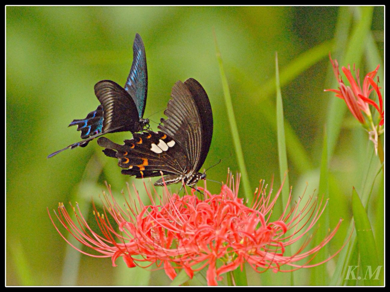 懲りもせず アゲハ蝶 Tadaa Community Butterfly Eye Em Around The World 勝蝶 蝶