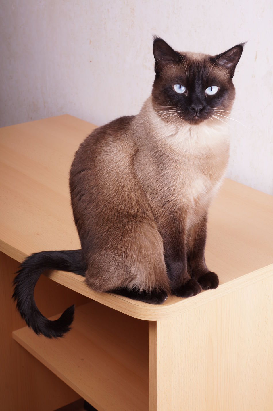 Beautiful stock photos of augen, Animal Themes, Blue Eyes, Brown, Domestic Animals