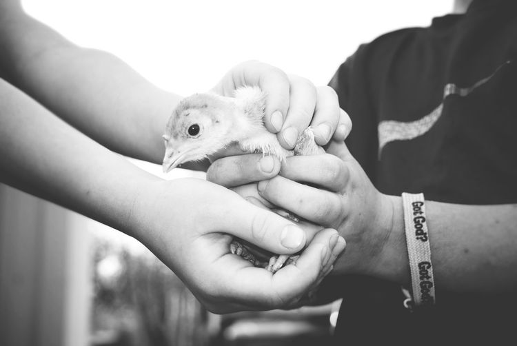 Children meet baby turkey Baby Animal Baby Farm Animals Baby Turkey Care Child Hands Children Close-up Farm Holding Small Turkey Togetherness Nature Two Is Better Than One Pet Portraits Black And White Friday