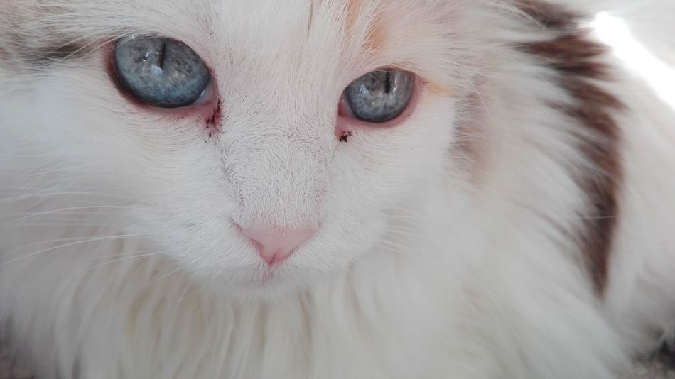 My Love ❤ My Cat Sky Eyes Love You No Edits No Filters No Filters  Popular Photos Hello World Relaxing Animal Animals Eyes Sky
