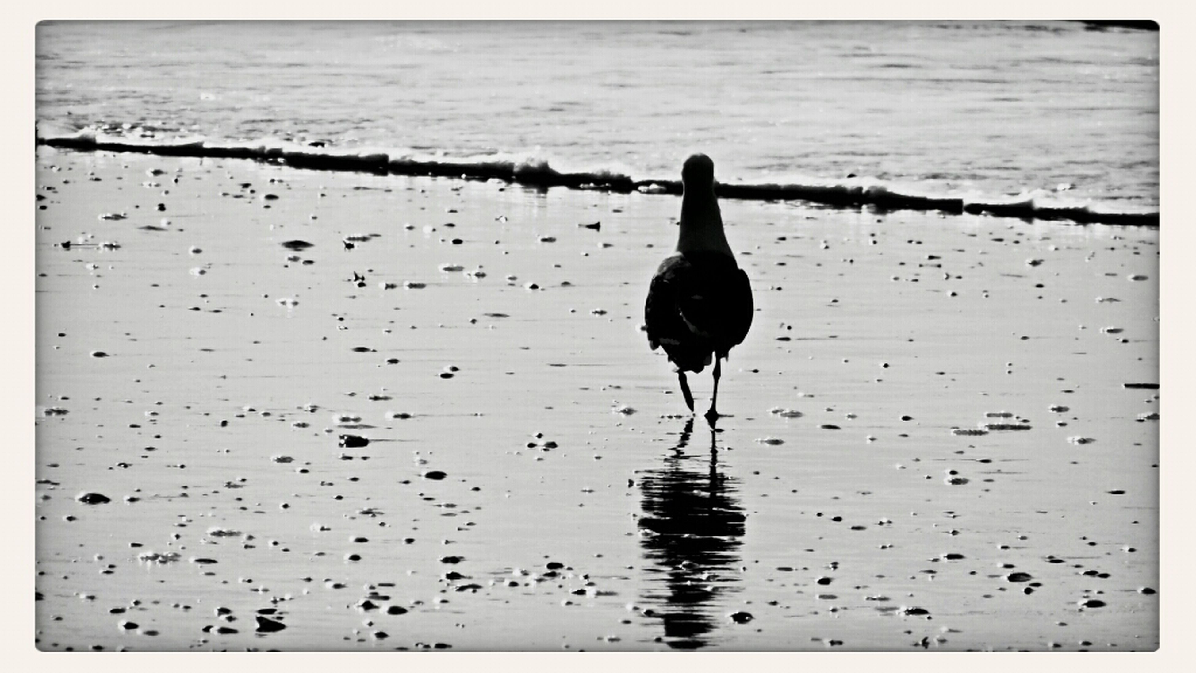 water, bird, animal themes, transfer print, animals in the wild, wildlife, one animal, sea, auto post production filter, silhouette, reflection, nature, rippled, lake, full length, beauty in nature, outdoors, waterfront, tranquility, sunset