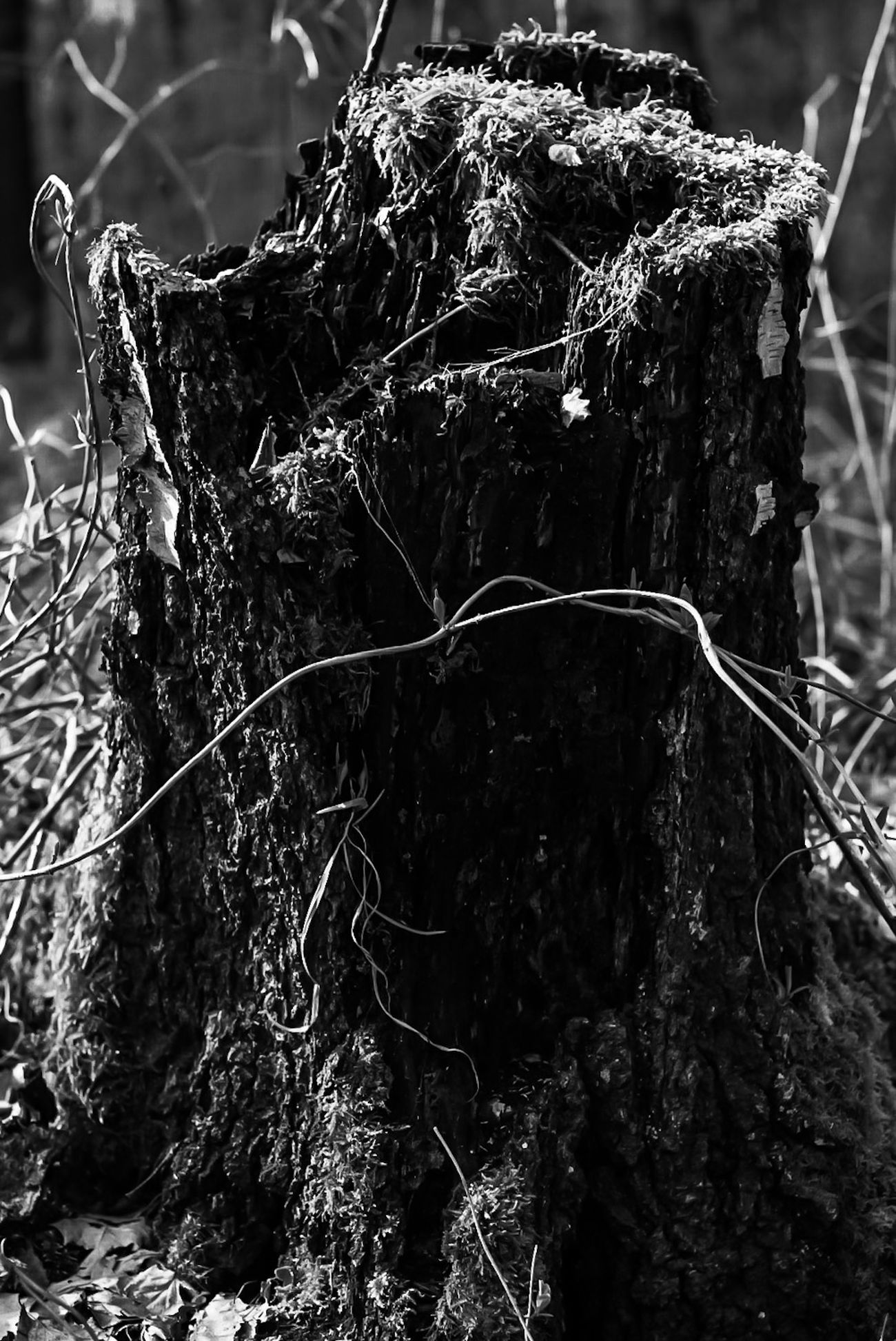 Tree No People Nature Outdoors Day Branch Sky Close-up Beauty In Nature Pics Waldrand Wald EyeEmNewHere Fotografie Forest Beauty In Nature Photography Tree Nature Pictures Tree Stump Tree Trunk Follower Bnw Photography Bnw_shot