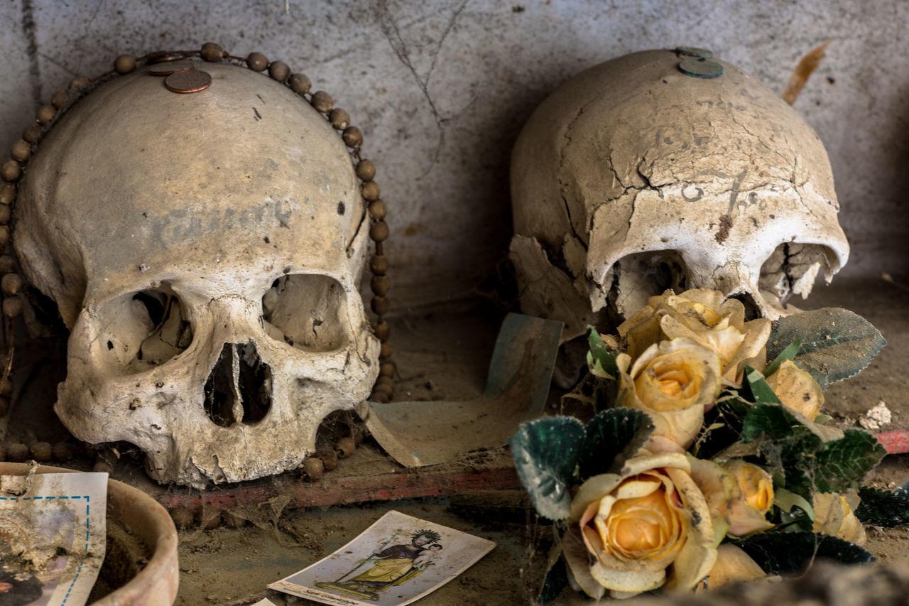 Beautiful stock photos of totenkopf, human skeleton, spooky, human skull, bone